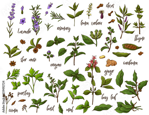 Photo  Hand drawn herbs and spices