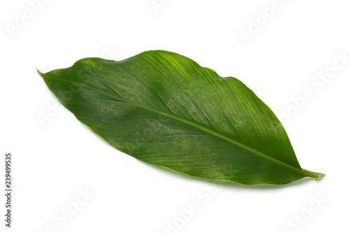 Fototapeta Single green cardamom leaf obraz