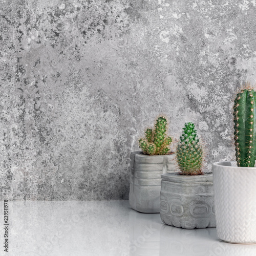 . Modern room decoration  Collection of concrete potted cactus house