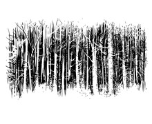Birchwood, Vector, Black-and-white Computer Graphics, Drawing A Feather, A Picturesque Sketch, A Background For Wall-paper Both For Printing And On Fabric