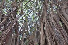 Scrappy Trees