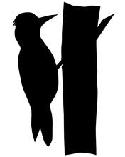 Animals-Woodpecker Silhouette ...