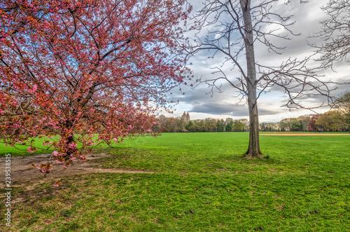 Zdjęcie XXL Central Park, Nowy Jork na wiosnę