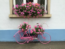 Cosy Vintage Pink Bike With Flowers