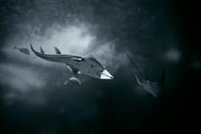 Soft Backlit Ocean Shark