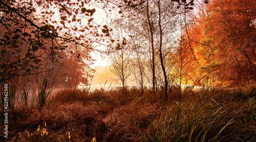 Fotobehang Rood paars Wald Schloss Herbst Bärensee Stuttgart