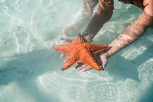 Crop Hands Holding Starfish On...