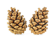 Two Brown Pine Cones On A White Background