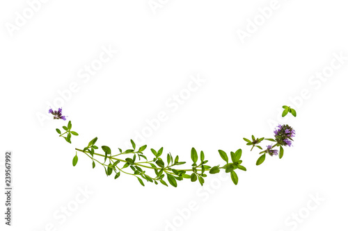 closeup of thyme leaves and flowers on white background with copy space above