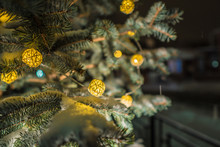 Close Up Of A Pine Cone Or Fir Cone In A Conifer Tree At A Christmas Tree Farm With A Garland Of Lights