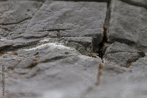 Dettagli rocciosi Wallpaper Mural