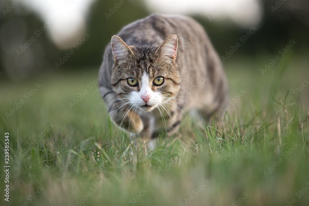 Katze beider Jagd
