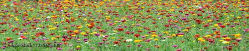 Foto op Plexiglas Weide, Moeras multi color summer flower field
