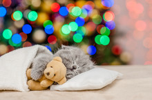 Baby Kitten Sleeping With Toy Bear With Christmas Tree On Background. Empty Space For Text