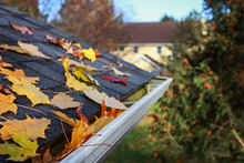 Autumn Leaves In A Rain Gutter...