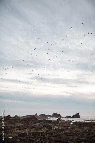 Photo  Gray Pacific Shoreline