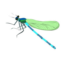 Isolated Bright Flying Dragonfly