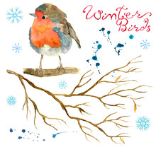 Design Set With Winter Bird, Snowflakes, Branch And Paint Drops Isolated On White. Natural Hand Painted Watercolor Illustration, Cut Out