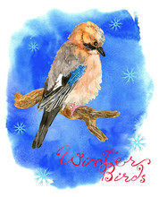 Winter Card With Woodpecker Bird, Snowflakes And Title On Blue Texture Background. Natural Hand Painted Watercolor Illustration, Cut Out