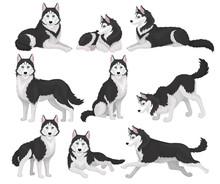 Collection Of Siberian Husky I...