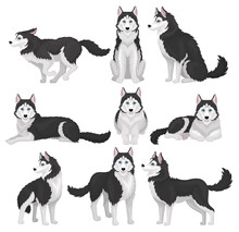 Siberian Husky Set, White And ...