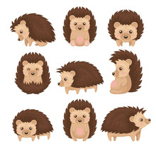 Cute Hedgehog In Various Poses Set, Prickly Animal Cartoon Character With Funny Face Vector Illustration On A White Background
