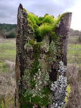 Old Fence With Moss And Lichen
