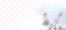 桜と青空と市松模様(ソフトなイメージ)