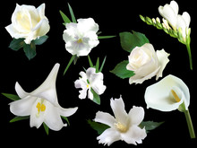 Collection Of Eight Isolated On Black White Flowers