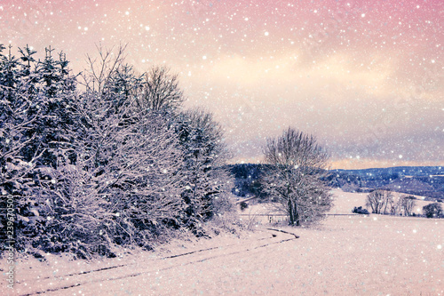 Foto op Aluminium Purper Winter Trees covered with snow and road.