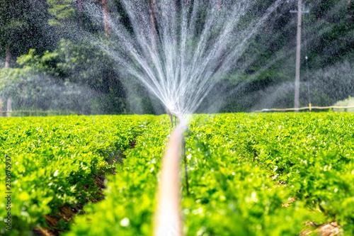 Foto  灌漑 農業