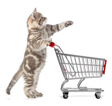 Cat With Shopping Cart Isolated