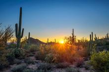 Sunset In Saguaro National Par...