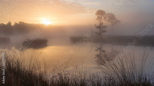 Serene atmosphere at sunrise with some clouds and trees reflecting in the water Slika na platnu