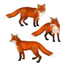 Red Fox Set