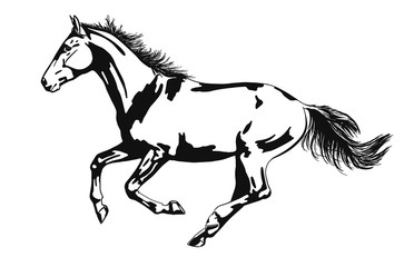 Vector image of a horse running gallop isolated on white background