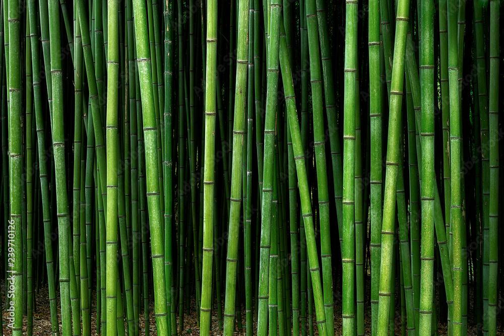 Fototapeta bamboo forest pattern