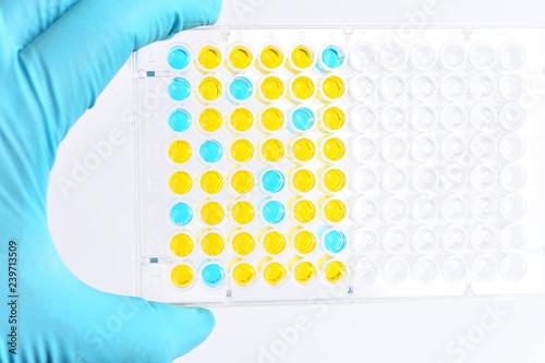 Photo Enzyme-linked immunosorbent assay or ELISA plate