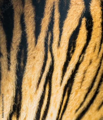 In de dag Tijger Animal skins texture of Tiger