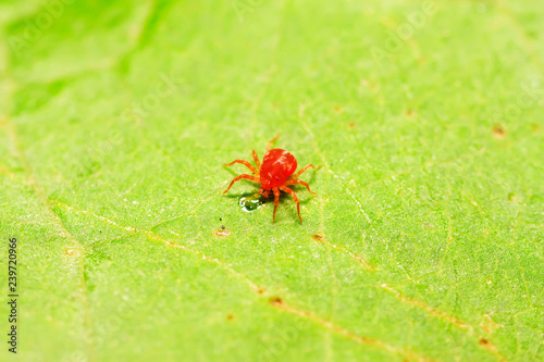 Photo red mite on plant