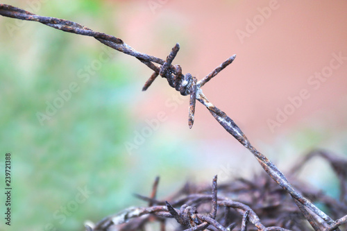 Fotografie, Obraz  barbed wire rust old, rusty old fences of barb wire that got tangled, barbed wir