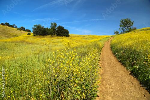 Canvas Prints Culture summer path through green meadows