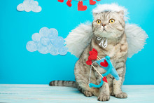 Cat Angel In The Form Of Cupid, Valentine's Day