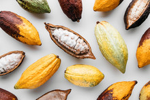 Cocoa Pods On A White Backgrou...