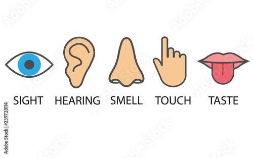 Foto  Human senses icon. Vector illustration, flat design.