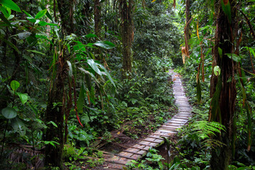 Fototapetarain forest trail in the Amazon rainforest of Colombia. A wooden path through the tropical jungle.