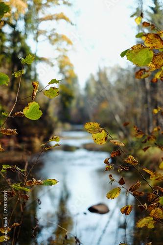 In de dag Begraafplaats Autumn in forest