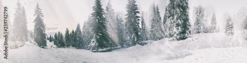 Fotografía Snowfall