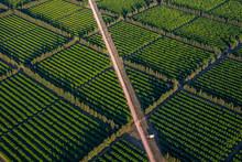 Plantations De Pamplemousses Vues Du Ciel En Afrique Du Sud