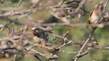 Goldfinch Birds Standing On Tr...